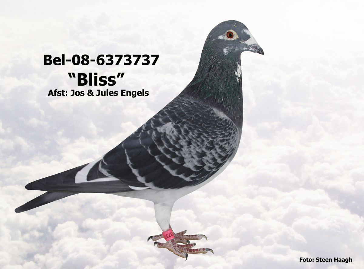 BEL-08-6373737.JPG