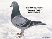BEL-09-6326216.JPG