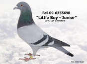 BEL-09-6355698.JPG