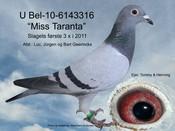 BEL-10-6143316
