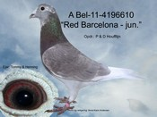 BEL-11-4196610