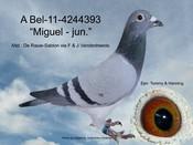 BEL-11-4244393