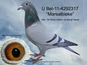 BEL-11-4292317