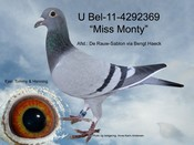 BEL-11-4292369