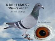 BEL-11-6326779