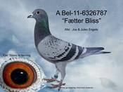 BEL-11-6326787